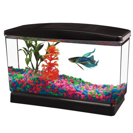Best Cheap Marine Tank For Sale Online - Akram Daily